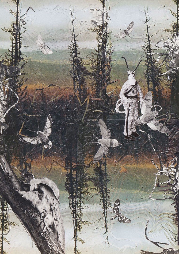 Moths Myth-Mores Rabenstern-klein